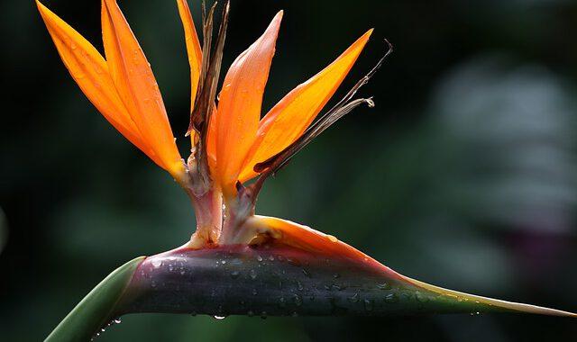 flower-4590184_640